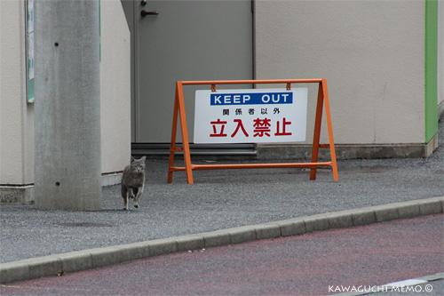 20120612_cat01.jpg