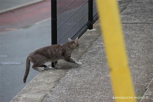 20120612_cat02.jpg